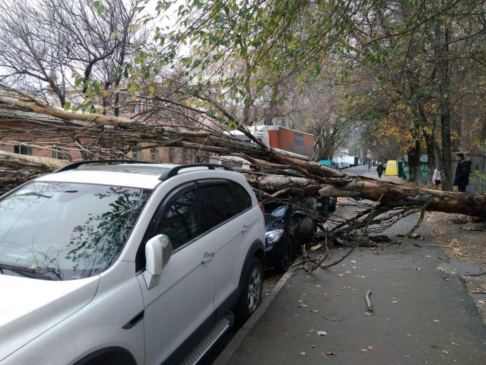 В Симферополе сухое дерево упало на машину