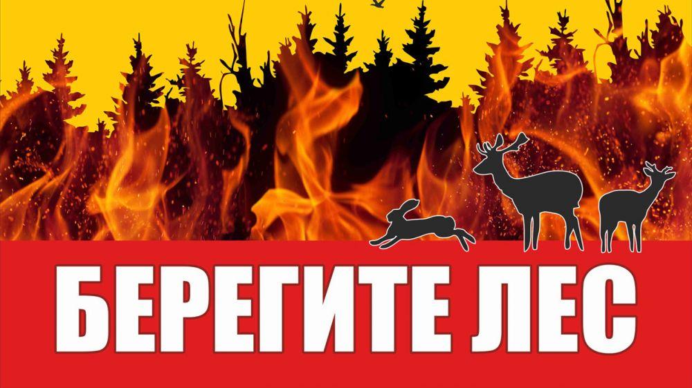 МЧС Республики Крым: Находясь в лесу, помните об осторожном обращении с огнём!
