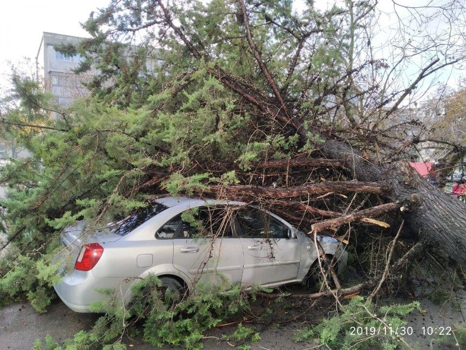 Во дворе на ул. Хрусталёва упавшее дерево раздавило автомобиль