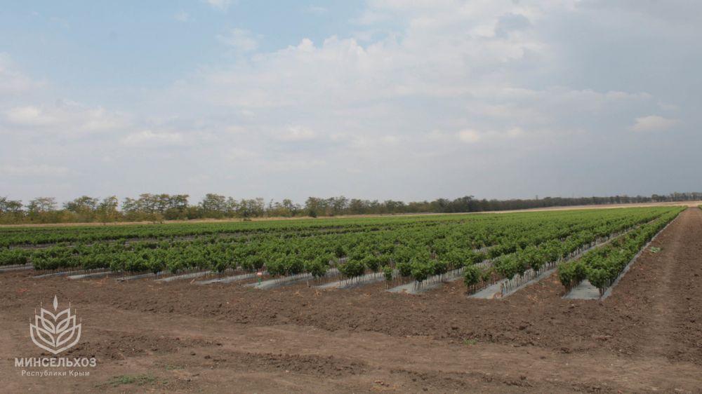 В Минсельхоз Крыма поступило более 50 обращений граждан о невыполнении условий по договорам аренды земель сельхозназначения – Андрей Рюмшин