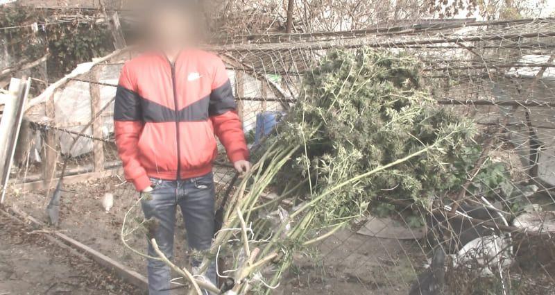 Огородник-«рекордсмен». В Керчи у местного жителя нашли 12 кг марихуаны
