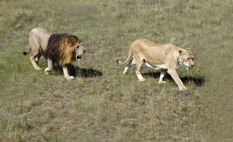 Бывший мэр столицы Ингушетии Беслан Цечоев готов забрать всех животных парка «Тайган»
