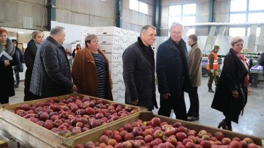 Сельскохозяйственным предприятием ООО «Сады Бахчисарая» в 2019 году собрано более 4 тысяч тонн урожая плодовых и 198 тонн винограда