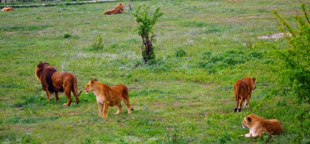 В Крыму закрыт парк львов «Тайган»