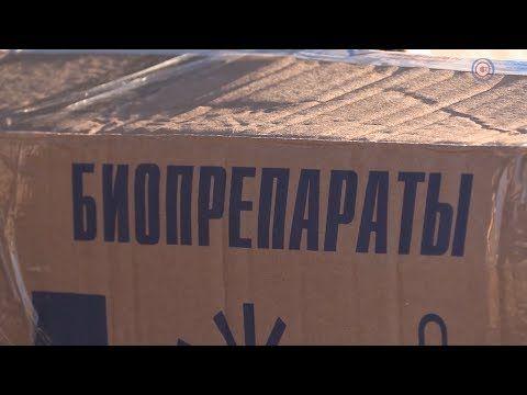 Вакцинация животных Севастополя продолжается