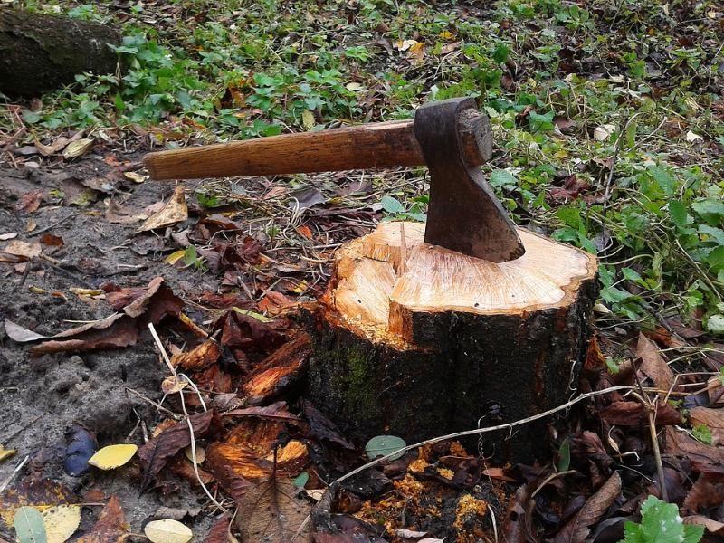Картинки по запросу вырубка деревьев