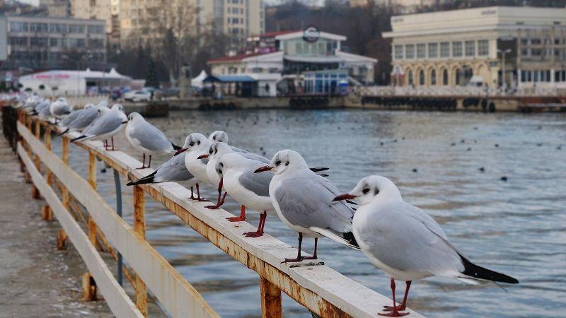В Севастополь с начала года переехало 6 тысяч человек
