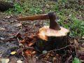 Сергей Аксенов потребовал ужесточить контроль за вырубкой деревьев