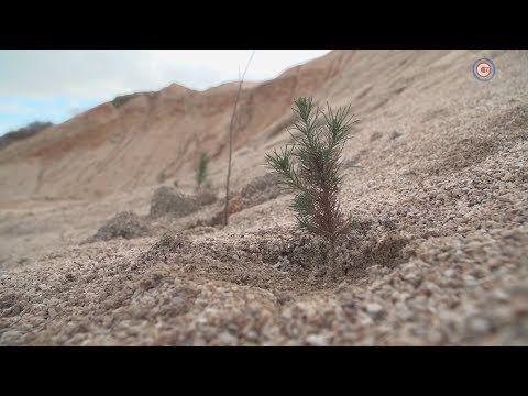 Склон Западно-балаклавского карьера озеленяют спелеологи