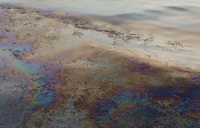 Море у берегов в Керчи превратилось в клоаку с нефтепродуктами