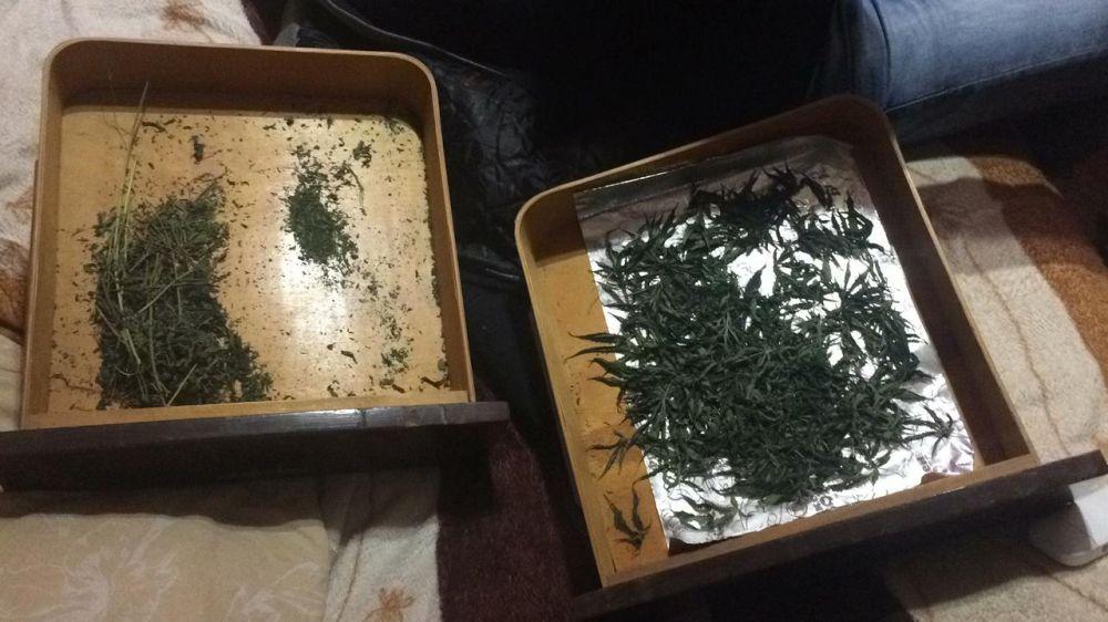 Сотрудники ФСБ поймали «наркофермера» из Феодосии