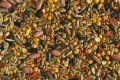 В Крыму произвели более 100тысяч тонн семян