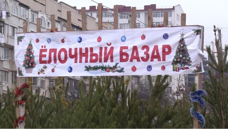 Где в Севастополе открылись елочные базары