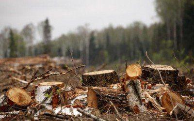 В Симферополе выявлена незаконная вырубка леса