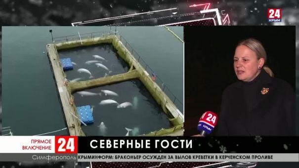 Дальневосточные моржи будут жить в Крыму