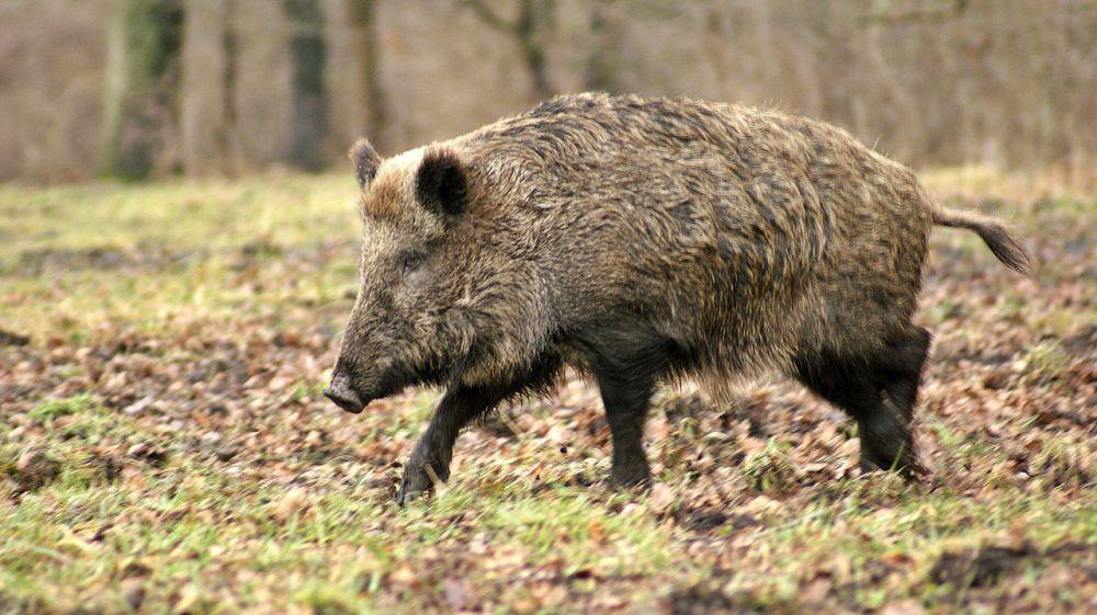 Госинспекторами Минприроды Крыма пресечена незаконная охота на территории Бахчисарайского района