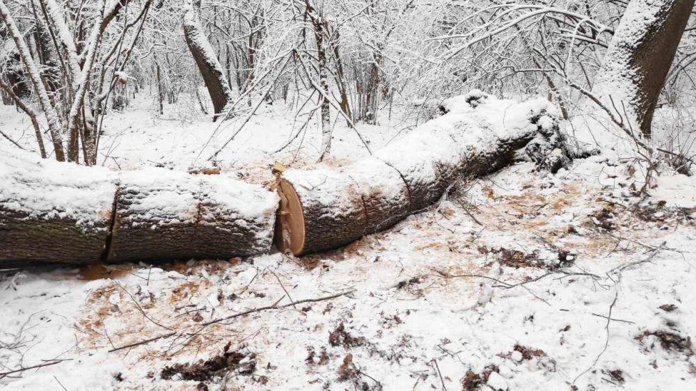 Лесной охраной пресечены факты незаконной заготовки дров на территории Белогорского лесничества