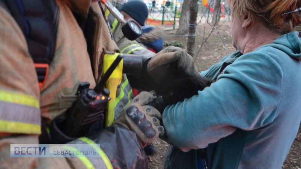 В Севастополе пожарные спасли двух котов из горящей квартиры