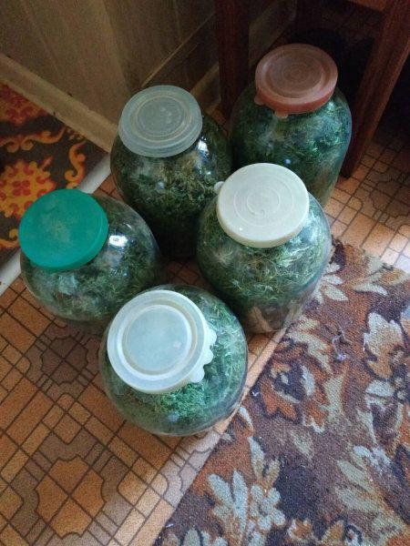 """Консервированная """"травка"""": у симферопольца нашли 6 банок с марихуаной"""