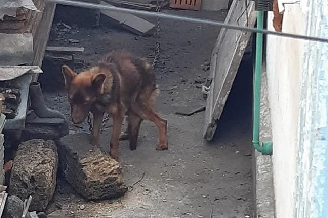 В Симферополе спасли измученную хозяевами собаку
