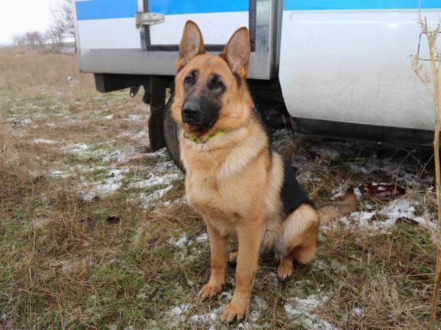 В Симферополе собака помогла поймать щипача