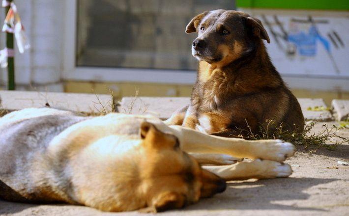 Строители Крымского моста ищут дом для трех десятков собак