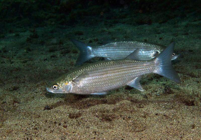 Заключаем договора пользования рыбоводным участком без торгов