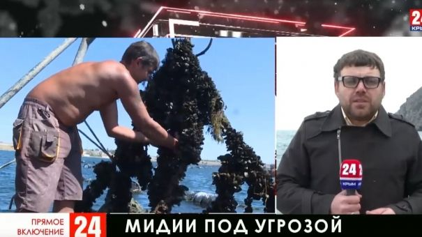 В Чёрном море резко сократилась популяция мидий