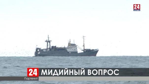 Куда пропали крымские дикие мидии?