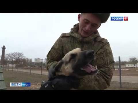 Хвостатые саперы: кто помогает инженерным войскам Крыма в разминировании бомб?