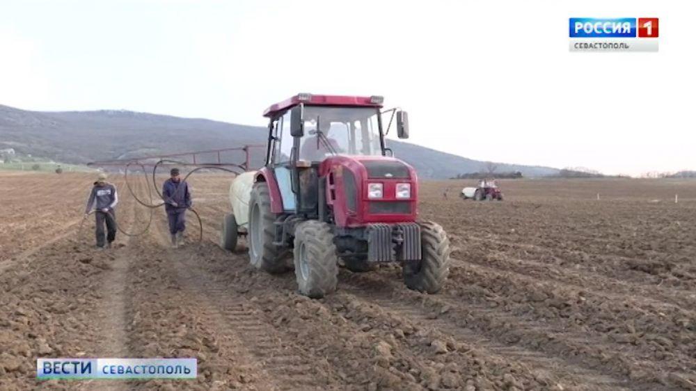За год в Севастополе заложено более 500 га новых виноградников