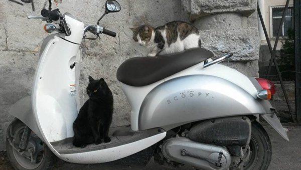 Двум подросткам из Ялты грозит до пяти лет за кражу скутера