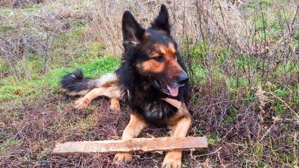 Пёс Цыган с Крымского моста обрёл дом