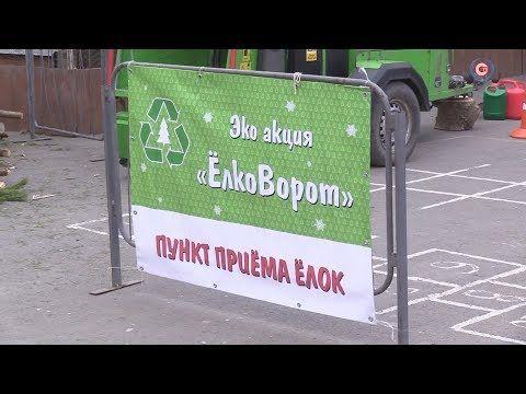 На смену ёлочным базарам в Севастополь пришёл «Ёлковорот»