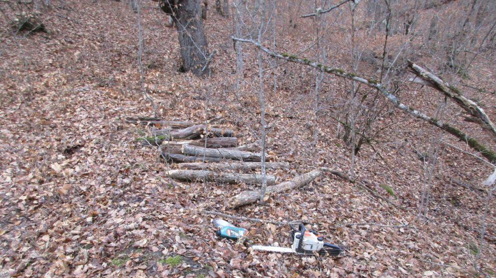 Лесной охраной пресечены факты незаконной заготовки дров в Бахчисарайском районе