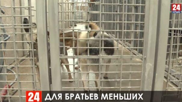 Появится ли в Симферополе приют для животных
