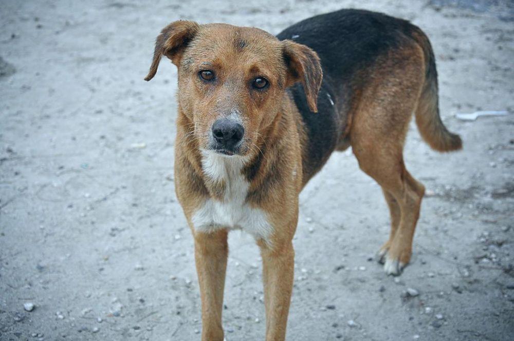 В Феодосии спасатели оказали помощь собаке с щенком