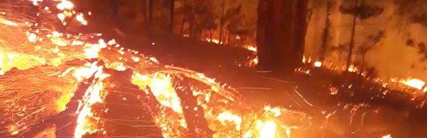 Первый пожар леса Ялтинского горно-лесного природного заповедника: сгорело 10 соток