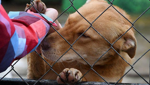 Власти Крыма обеспокоились судьбой недостроенного приюта для животных