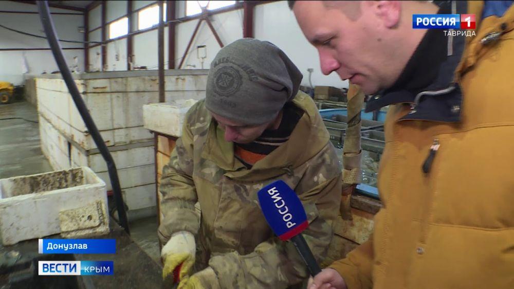 Крым выходит на международный рынок: куда будут экспортировать устрицы?