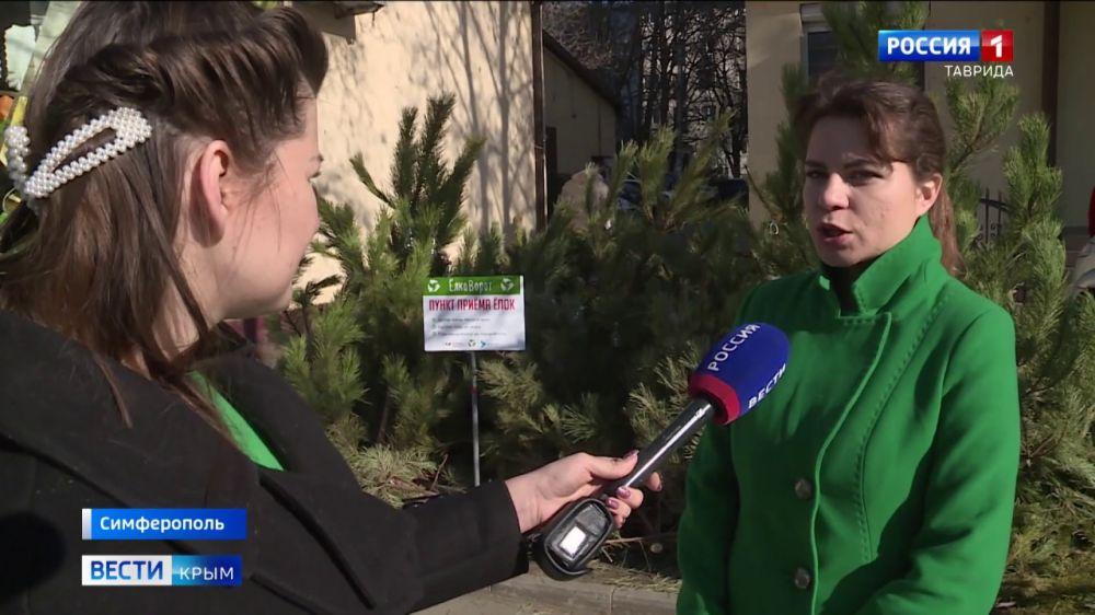 «Ёлковорот» в Крыму: на что пойдут новогодние деревья?