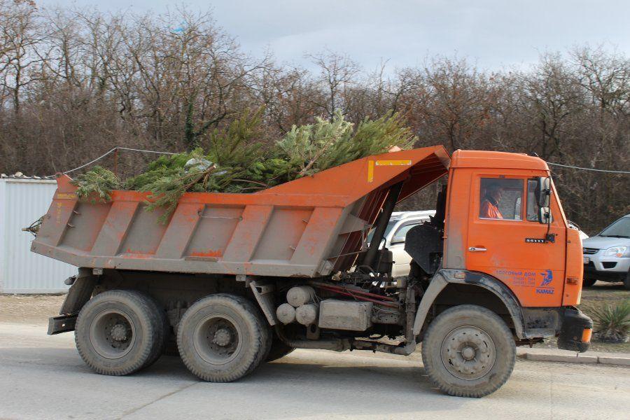 В Севастополе начали перерабатывать новогодние ёлки