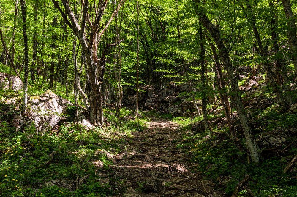 Севприроднадзор незаконно отдал частникам 6 тысяч га леса - прокуратура