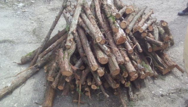 В Севастополе уничтожены более полусотни кустов можжевельника