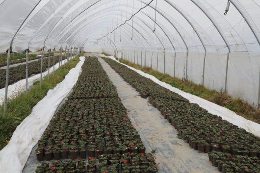 Владимир Константинов посетил тепличные комплексы по выращиванию ягод и овощей Бахчисарайского района