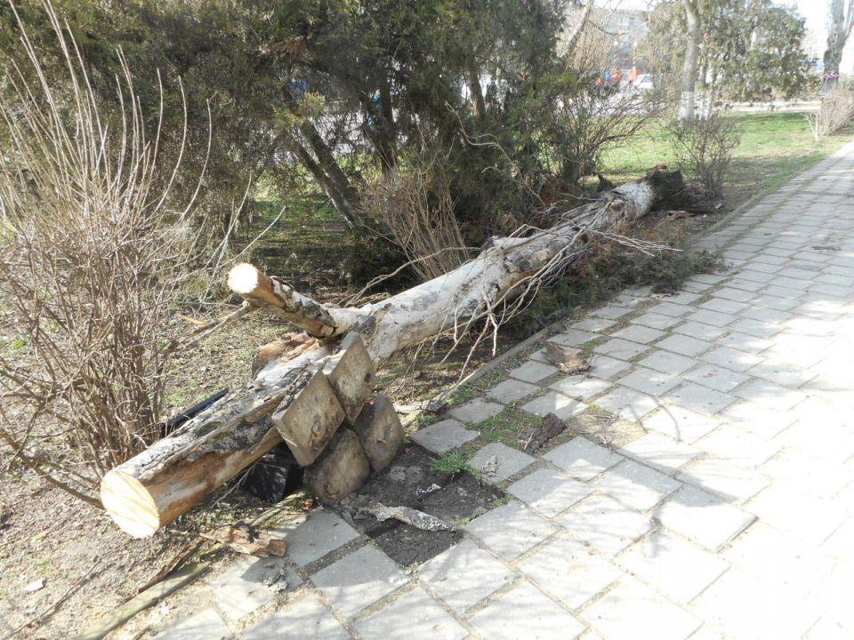 В Керчи мужчина погиб из-за упавшего дерева