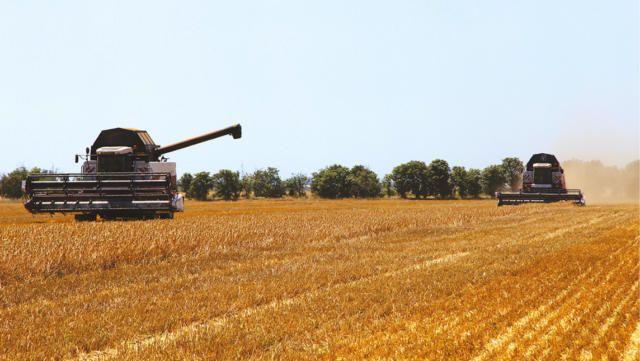Стало известно, сколько зерна экспортирует Крым