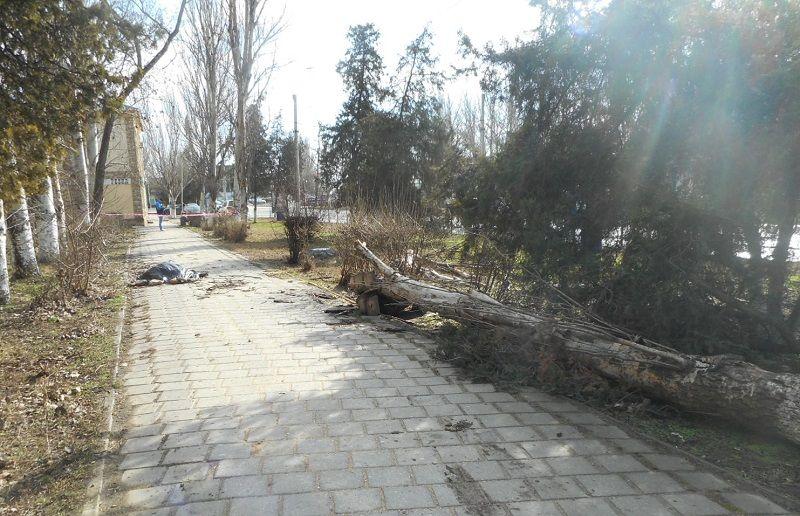 В Керчи возбуждено уголовное дело по факту гибели местного жителя в результате падения на него дерева
