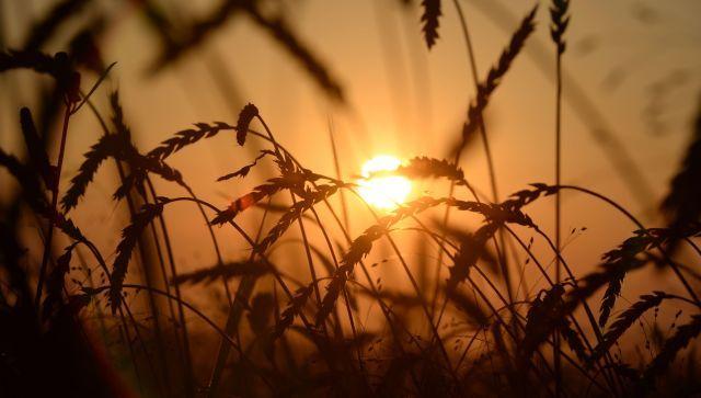 Сколько зерна Крым отправил на экспорт