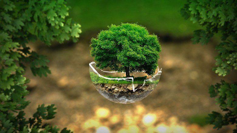 15 февраля в Крыму стартует масштабная экологическая акция
